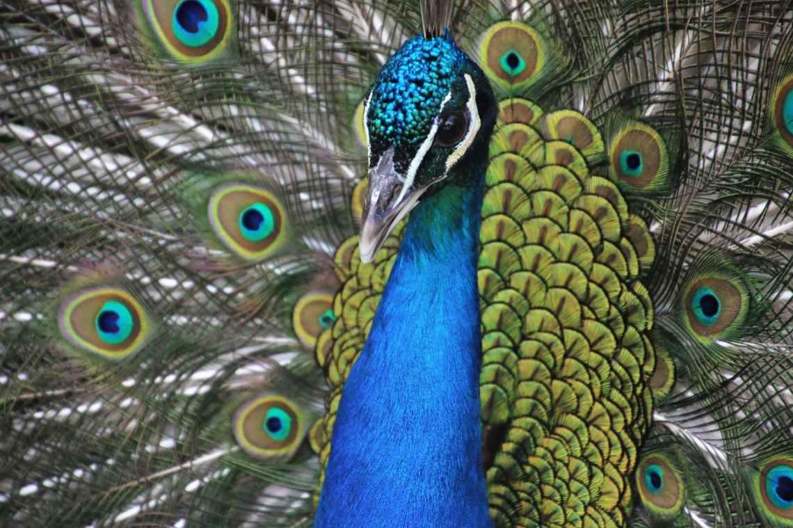 animal animal photography avian bird